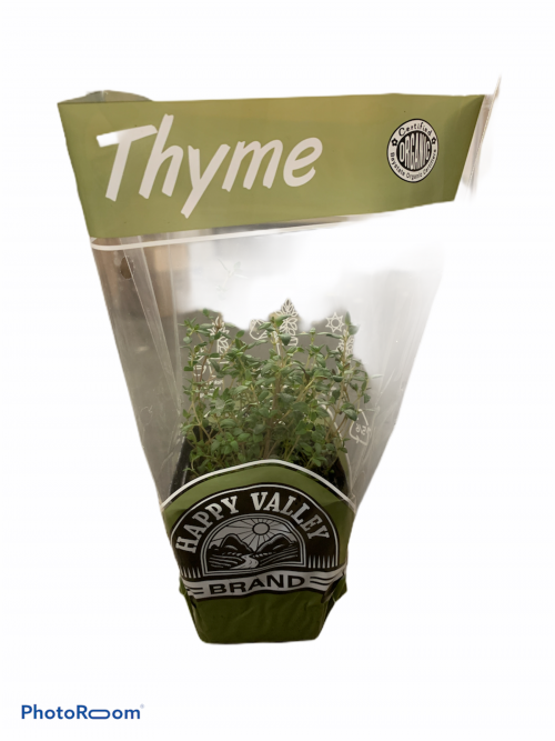 Potted Organic Thyme