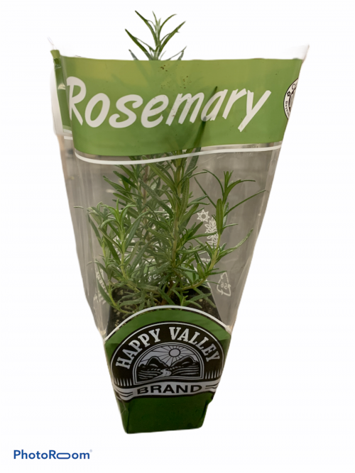 Potted Organic Rosemary