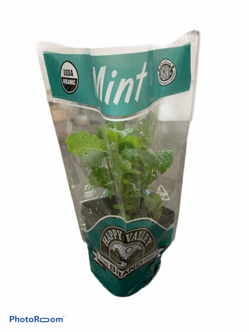 Potted Organic Mint