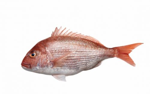 City Fish Market-Red Snapper 6-8oz